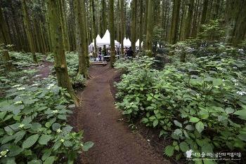 제주의 6월 어디로 가지? 사려니숲 에코힐링 2018