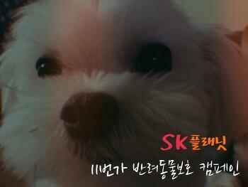 우리집 냥이와 댕댕이를 위한 SK플래닛 11번가 반려동물보호 캠페인