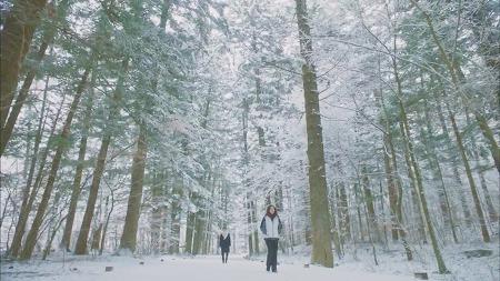 '속도없이' 아름다운 평창 오대산 월정사 전나무숲길 | 도깨비 촬영지