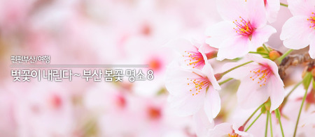 벚꽃이 내린다~ 봄꽃 향기 가득 부산 봄꽃 명소 8