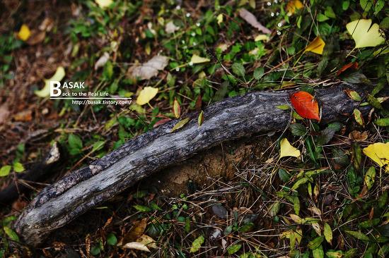 간만의 가을 사진...