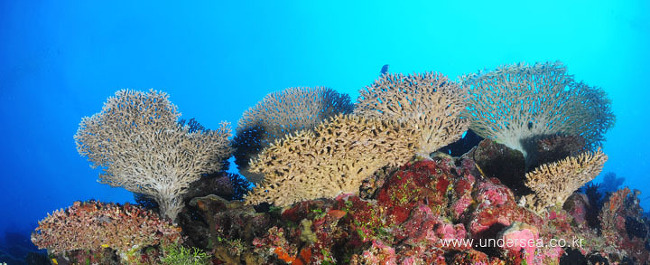 under the table coral, Palau