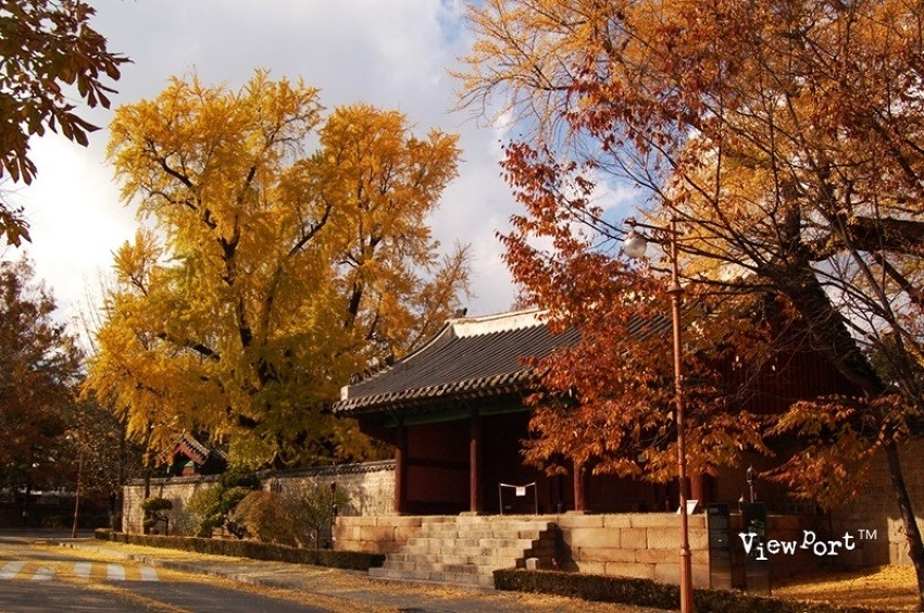서울 가을을 느낄수있는 대표적인 장소(성균관은행 덕수궁단풍 하늘공원 억새 선유도 코스모스)