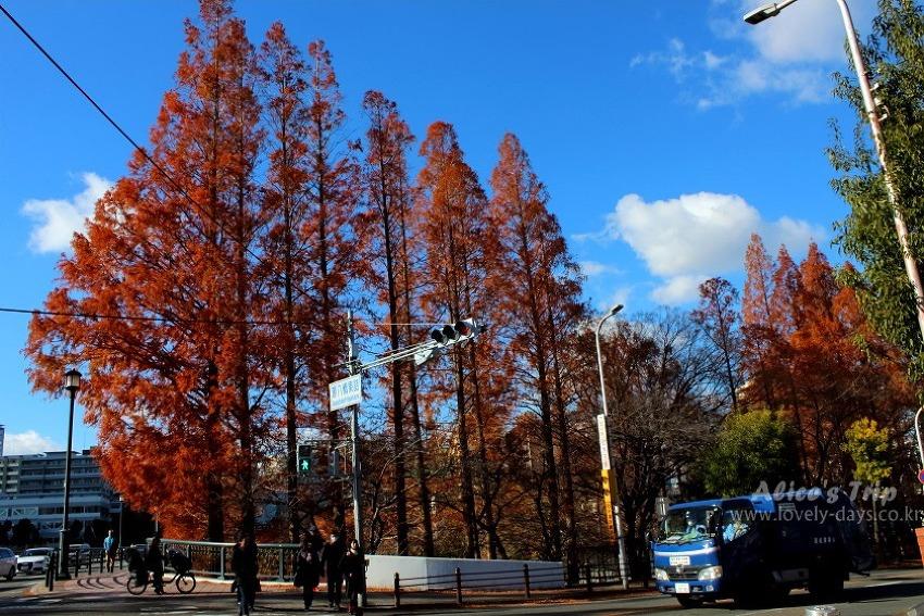 Alice의 겨울 오사카 여행 미리보기/ 겨울 일본 여행 팁