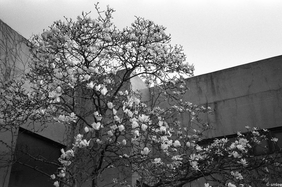 포항 with Leica M4, 35mm f/2.0 summicron..
