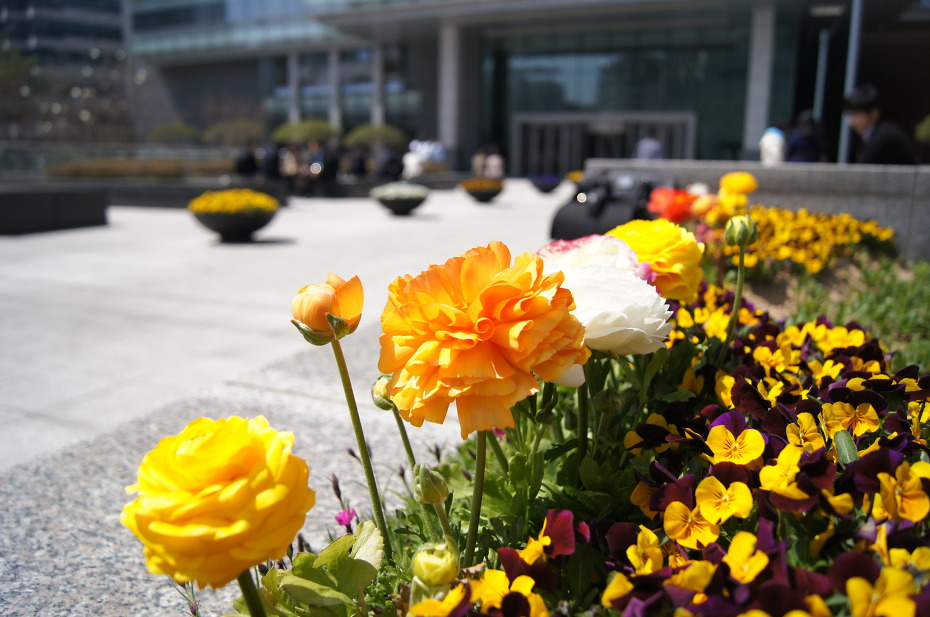 봄의 이야기