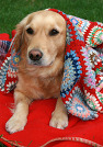담요 덮은 강아지