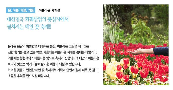 태안 튜울립 꽃 축제