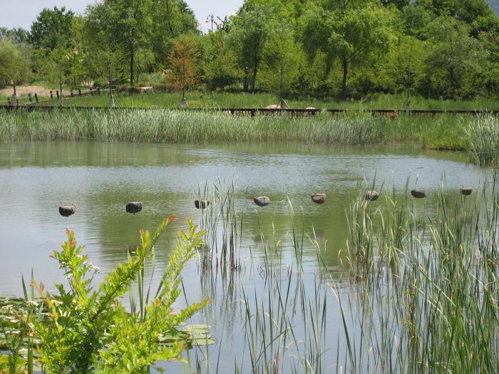 한밭수목원 수생식물원