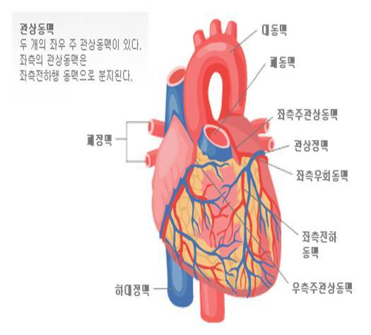 우리 몸의 엔진 심장!! 더 젊게 하는 방법?!