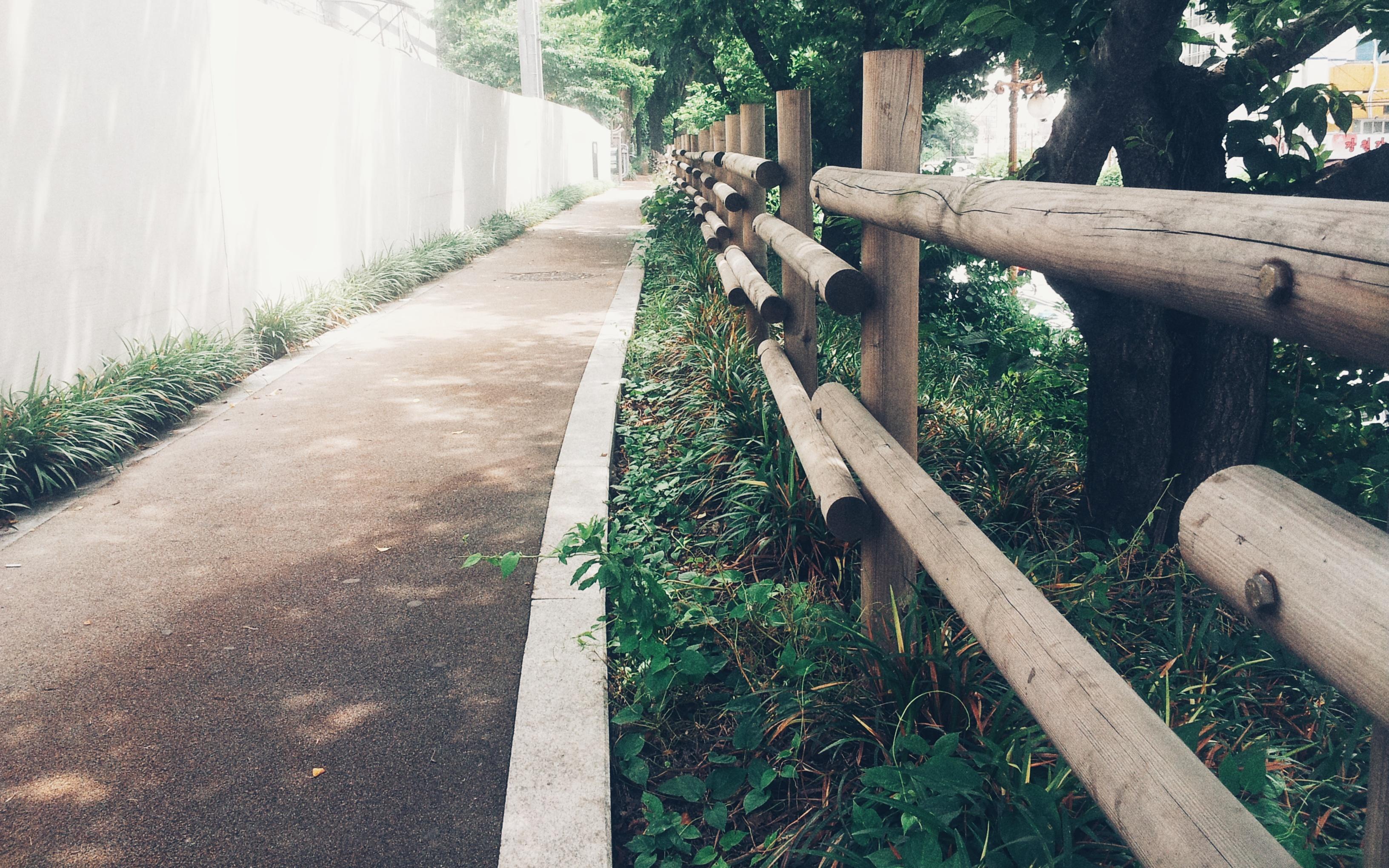 국내 여행 삼림 휴양지 목책 나무 길 햇빛 뽀샤시 판자 갈대 봄길 자연 보호 가로수 웨이 하이킹 무료이미지