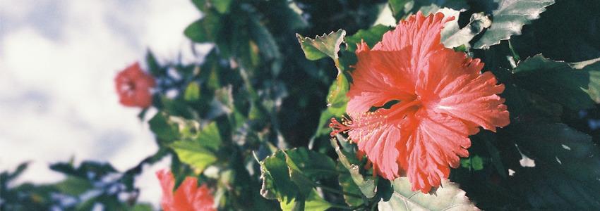 고화질 꽃