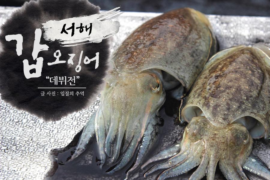 서해 갑오징어 낚시(1), 생애 처음으로 경험한 갑오징어 낚시