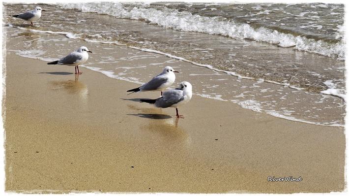 해변의 갈매기