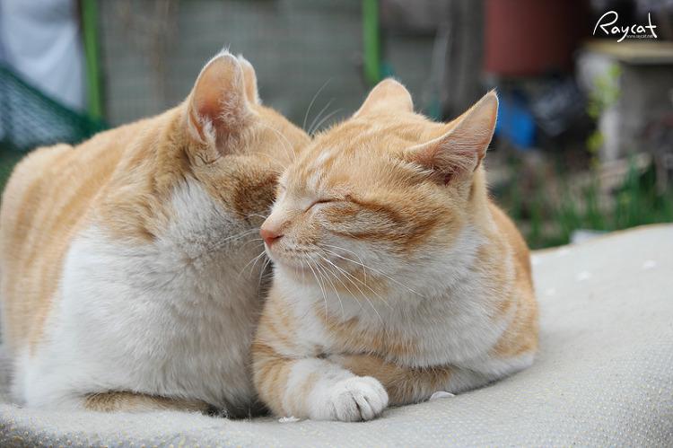 길고양이들