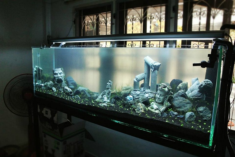 "Aquatic plant tank with extreme imagination ""The Fallen"" 3 เดือนกว่าๆ ""타락"""