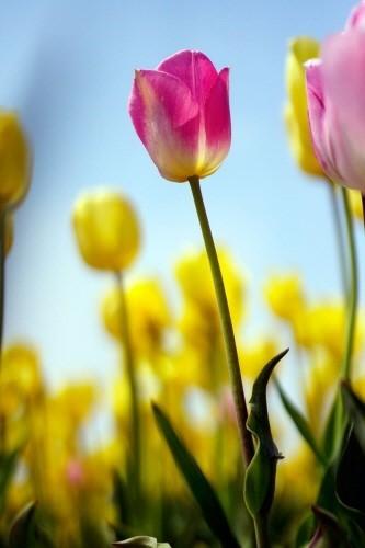 삼성물산 건설부문 봄꽃축제5