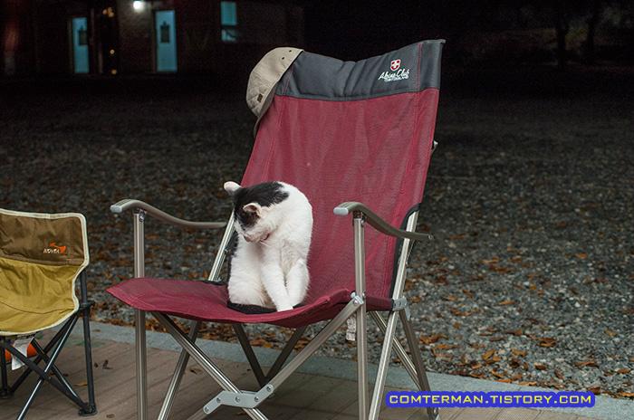 캠핑장 고양이