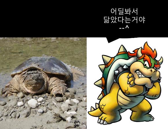 쿠파 거북이 Koopa Turtle