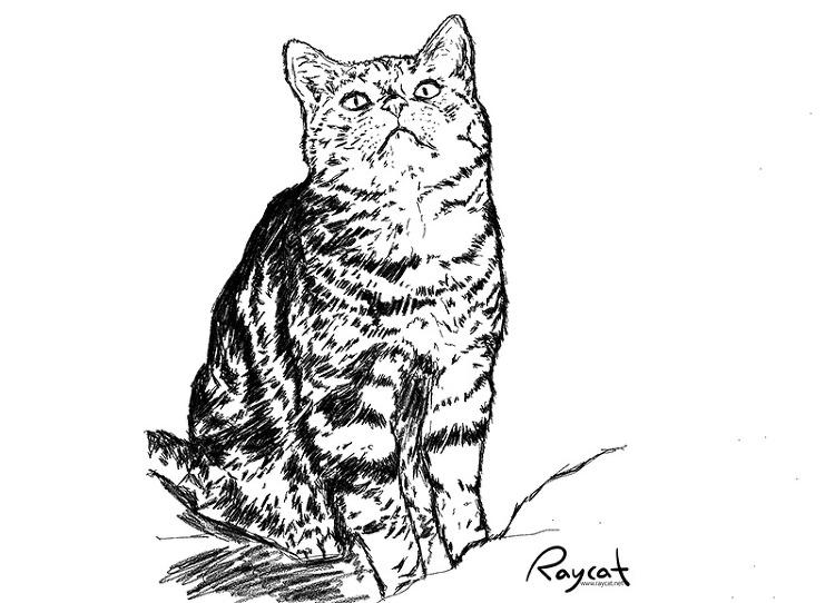 고양이 10년 스케치
