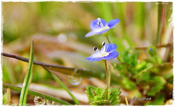 작은 풀꽃