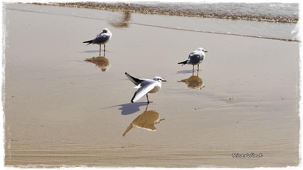 송정해변 갈매기