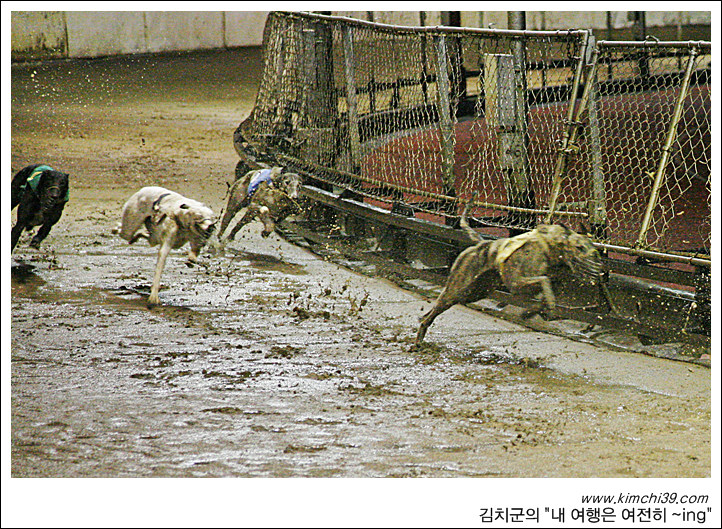 carnidrome greyhound race