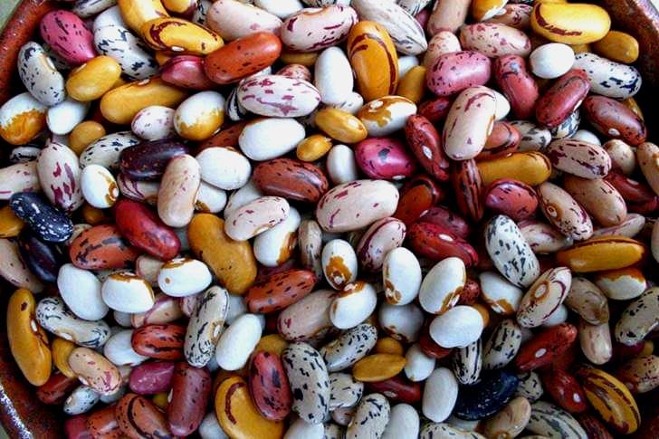 매니토바 주는 세계 곳곳에 콩을 수출합니다