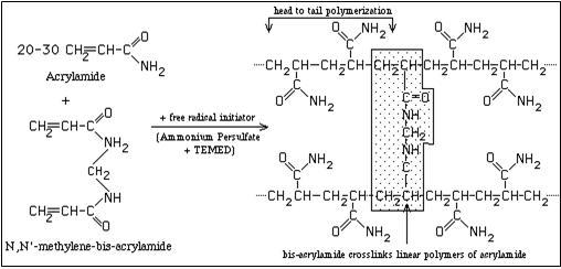 amonium sulfate protocol Procedure 42: ammonium sulfate precipitation  ammonium sulfate  precipitation (salting out the я-galactosidase protein) dialysis (desalting and  buffer.