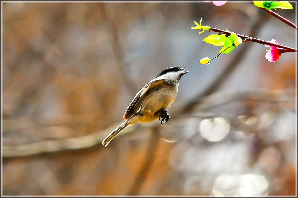 새들과 놀기(인천대공원에서)