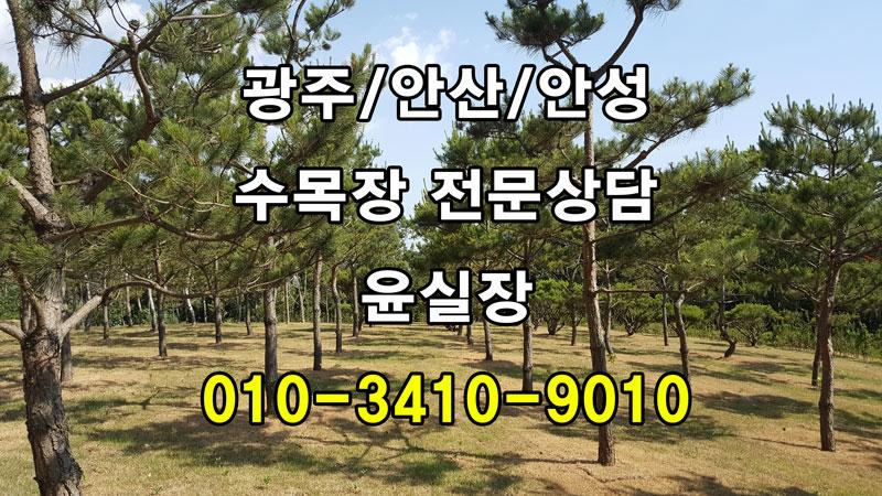 경기도 안산 수목장