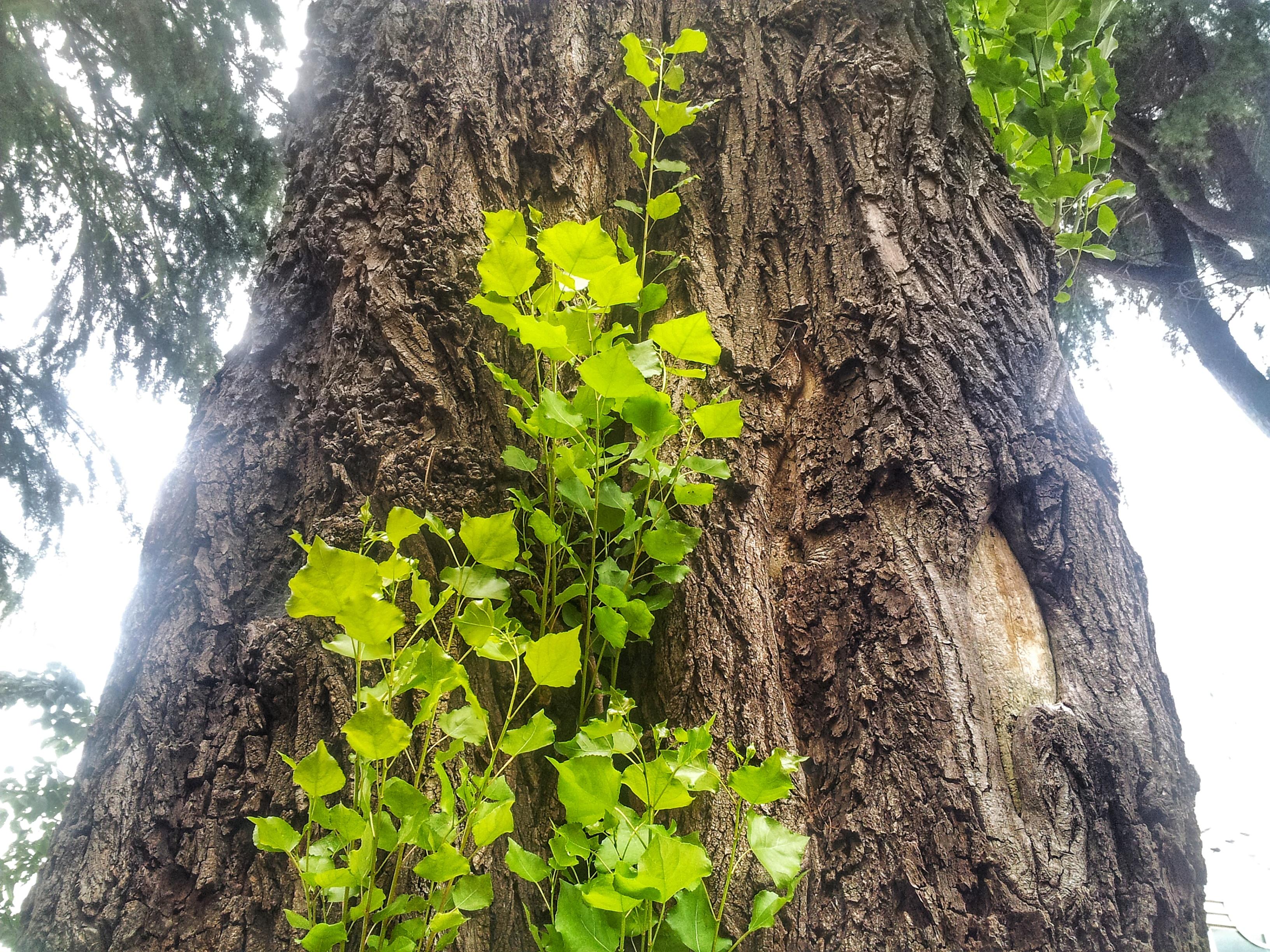초록 꽃잎 나무 줄기 초록 새싹 봄 여름 가을 잎사귀 젊은 푸른 숲 지점 늙은 나무 무료이미지