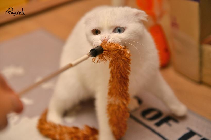 고양이 무른변과 설사에 좋다는 퓨어비타와 뉴트로초이스 사료