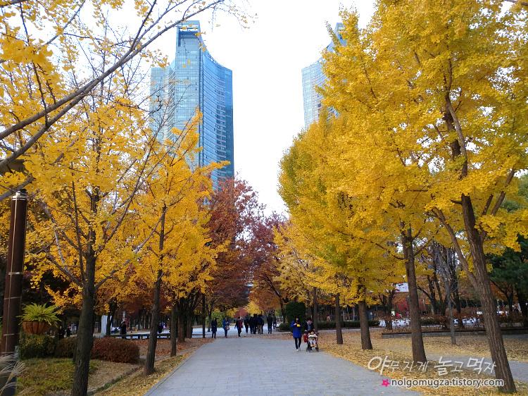 서울숲 은행나무길