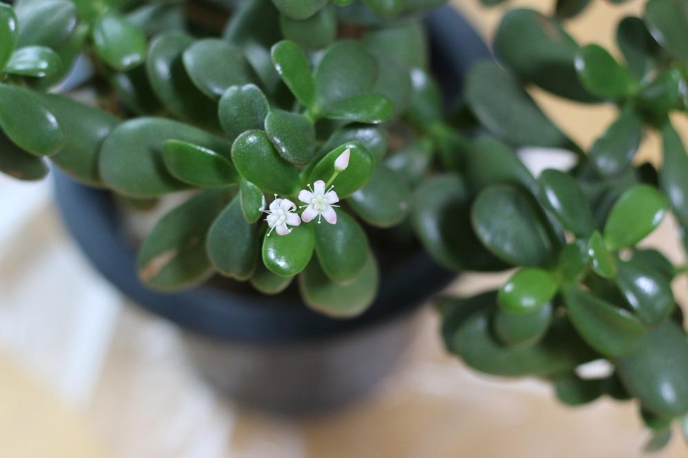 한겨울에 꽃이 피었습니다