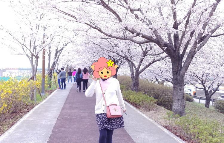 부산 대저생태공원 벚꽃 데이트