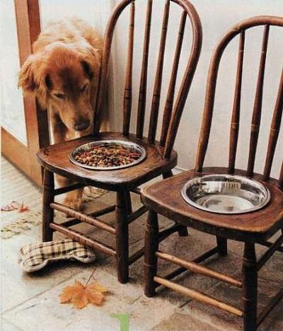 강아지 식탁