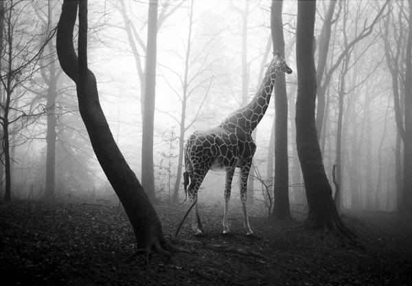 포토샵으로 자유가 된 동물들21