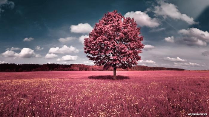 너무 예쁜 핑크 풍경