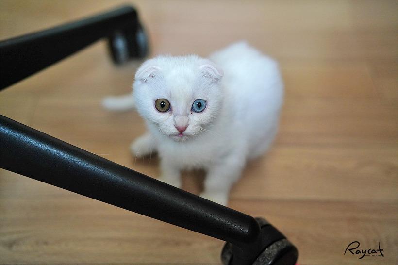 집 고양이들 만의 서열 정리