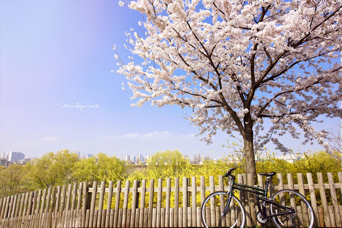 Roll The Dice :: 봄날,, 벚꽃,, 자전거..