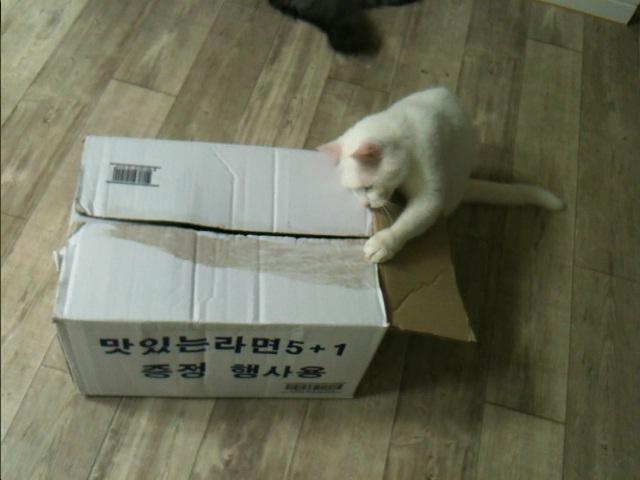 응삼이 박스고양이